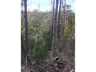 Lot 1 Oakfords Road, Lower Wattle Grove