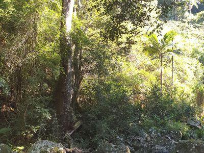111 Upper Wilsons Creek Road, Upper Wilsons Creek