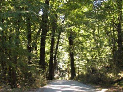 1733 Glenorchy-Paradise Road, Glenorchy