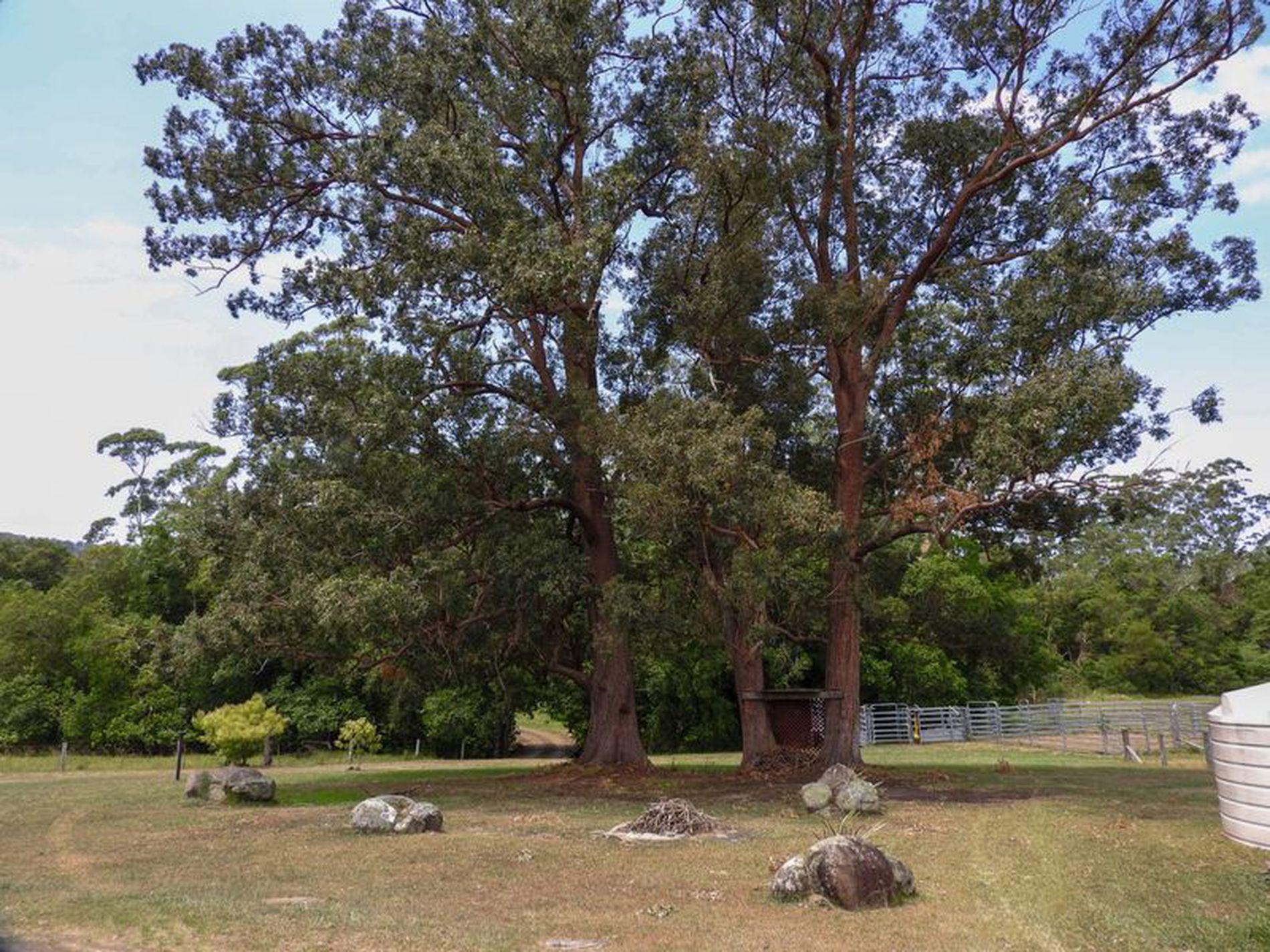 111 Koolah Creek Road, Taree
