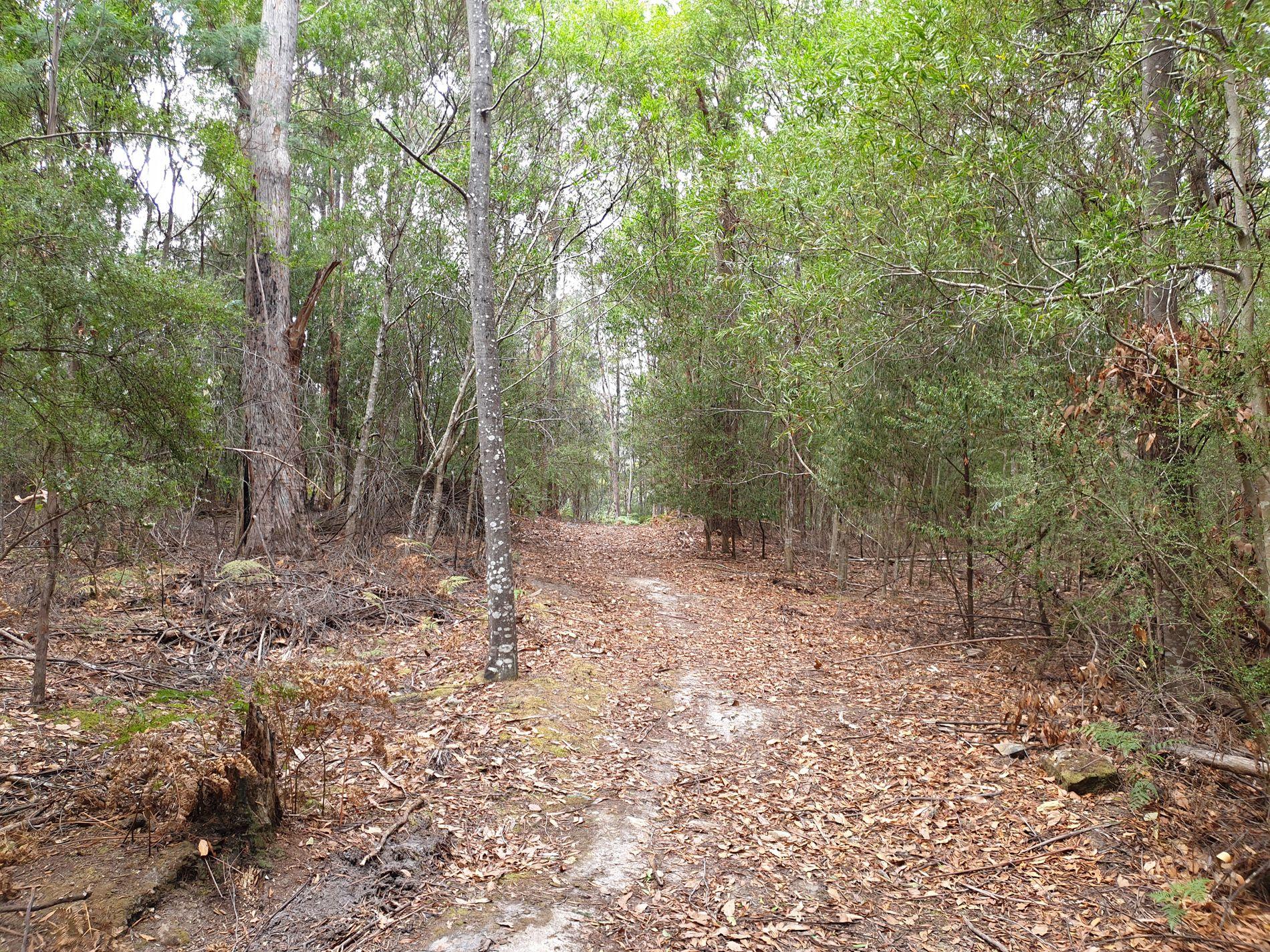 Lot 1, Halls Track Road, Pelverata