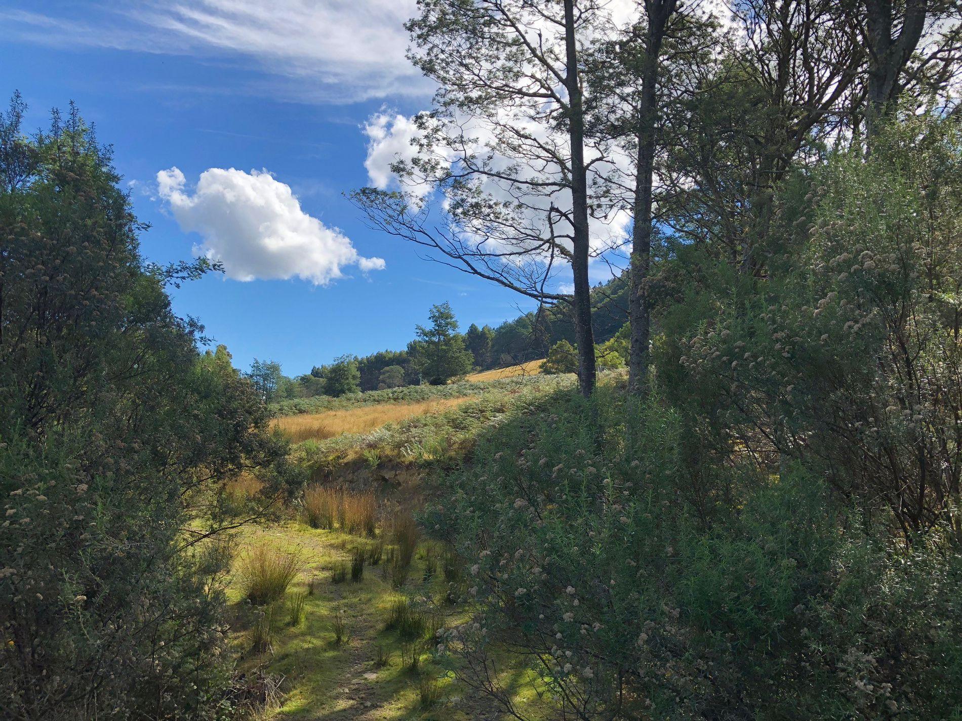 687 Pelverata Road, Kaoota