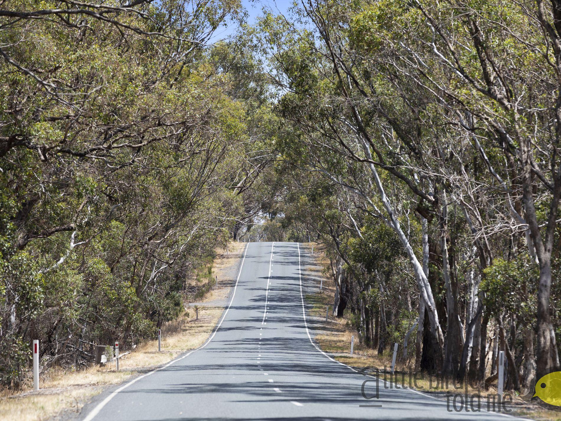1705 SEYMOUR-TOOBORAC ROAD, Glenaroua
