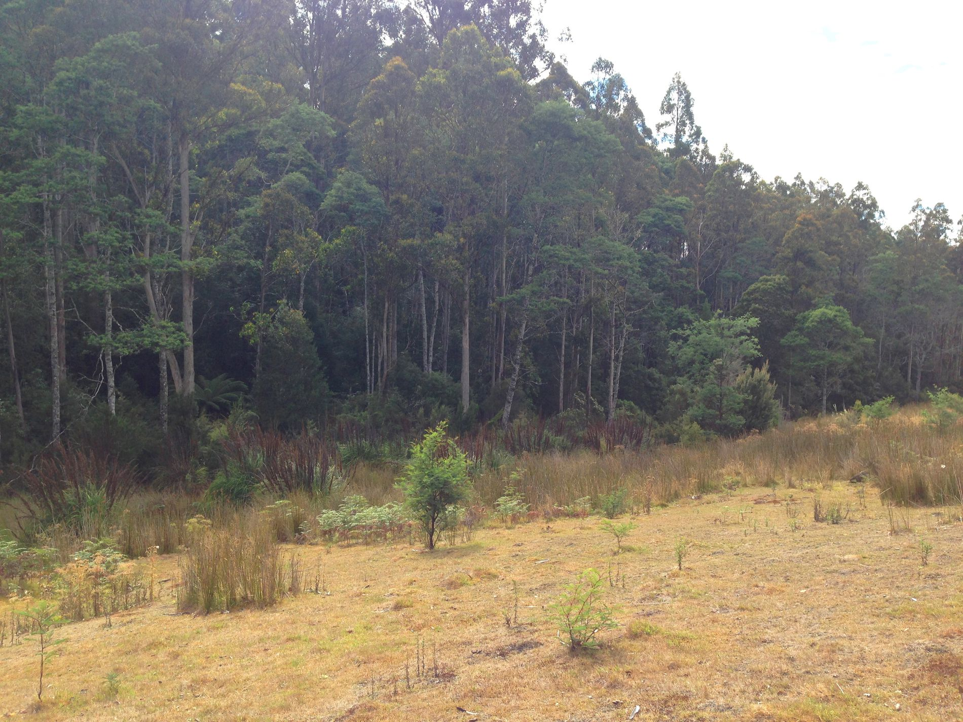 Lot 1, Harwoods Road, Castle Forbes Bay